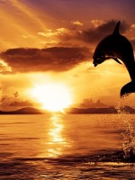 water_sunset_ocean_clouds_nature_animals_dolphins_watercolor_sealife_skies_sunset_cloud_sea_1920_Wallpaper_2560x1600_www.wallpaperswa.com (1)